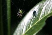 Spider_150506