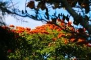Sri Lanka_S_-1144