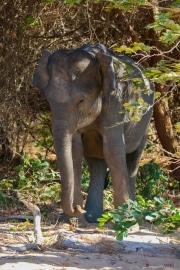 Sri Lanka_S_-1277