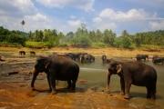 Sri Lanka_S_-783