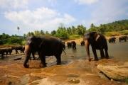 Sri Lanka_S_-841