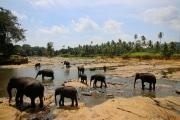 Sri Lanka_S_-853