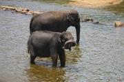 Sri Lanka_S_-897