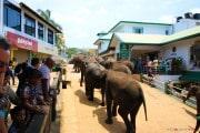 Sri Lanka_S_-914
