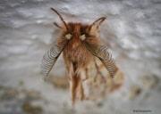 Papillon de nuit_131222
