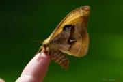 Papillon_Hachette_150511-1