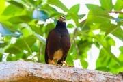 Sri Lanka_S_-750
