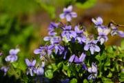 Fleurs_des_bois-2