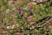 Fleurs_des_bois-7