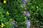 Les _fleurs_du_Creux_du_Van-6