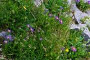 Les _fleurs_du_Creux_du_Van-7