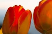 les_fleurs_printanieres_de_notre_jardin-10