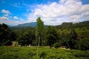 Sri Lanka_S_-1005