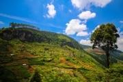 Sri Lanka_S_-1036