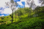 Sri Lanka_S_-1038