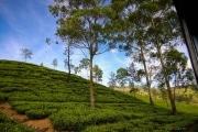 Sri Lanka_S_-1060