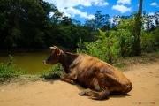 Sri Lanka_S_-1118