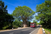 Sri Lanka_S_-264