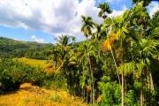 Sri Lanka_S_-565