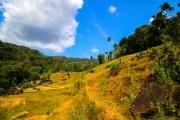 Sri Lanka_S_-575