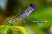 Sri Lanka_S_-606