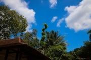Sri Lanka_S_-665