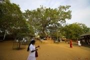Sri Lanka_S_-96