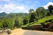 Sri Lanka_S_-991